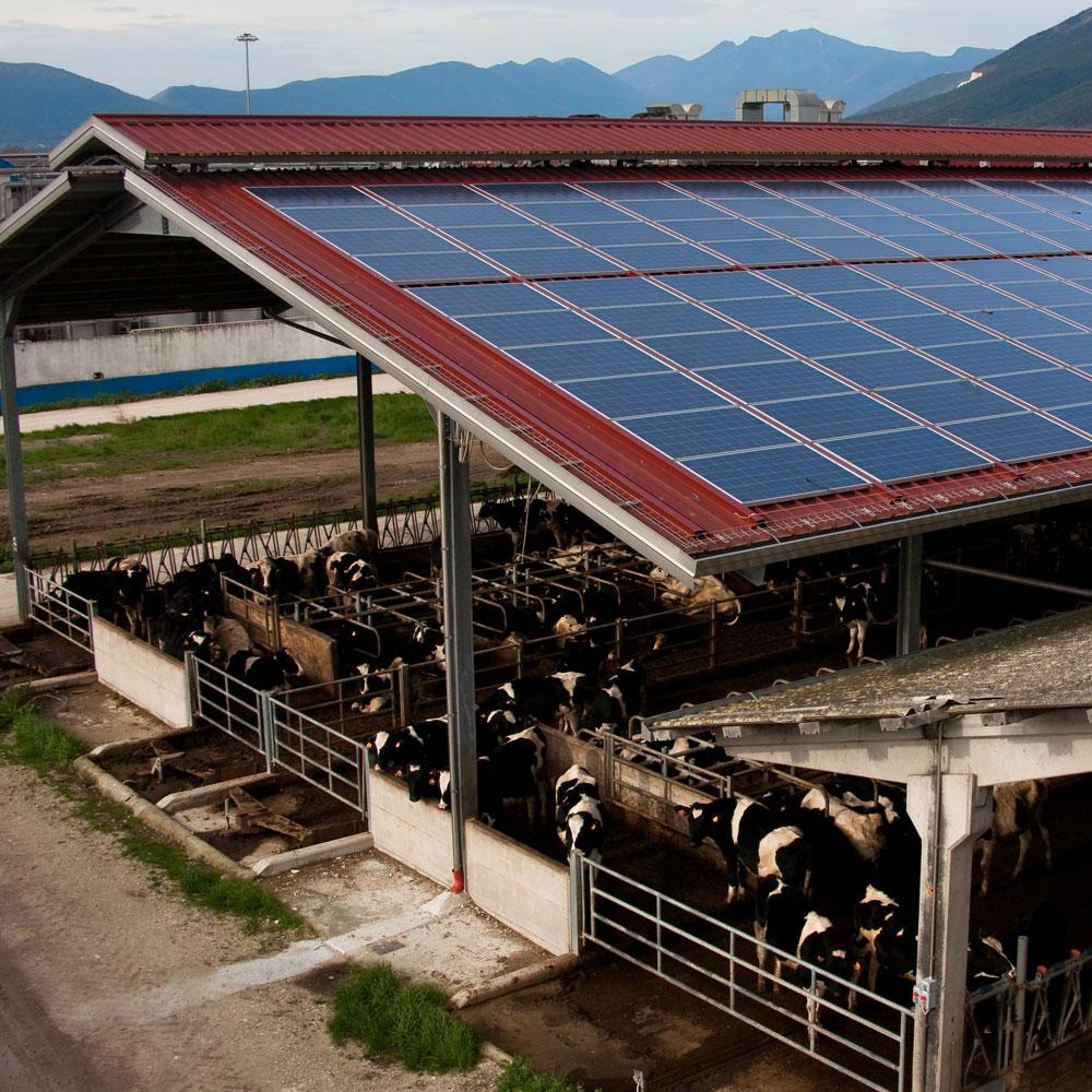 copertura fotovoltaico particolare capannone cirio napoli sifracoperture